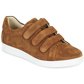 鞋子 男士 球鞋基本款 André AVENUE 棕色