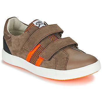鞋子 男孩 球鞋基本款 GBB AVEDON 棕色