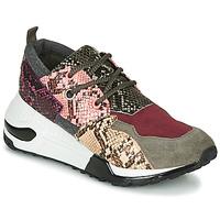 鞋子 女士 球鞋基本款 Steve Madden 史蒂夫·马登 CLIFF 多彩