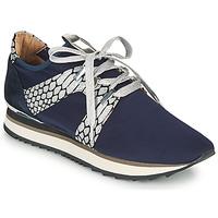 鞋子 女士 球鞋基本款 Adige XAN V4 KOI SILVER 蓝色