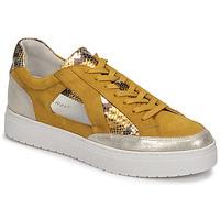 鞋子 女士 球鞋基本款 Regard HARY2 黄色