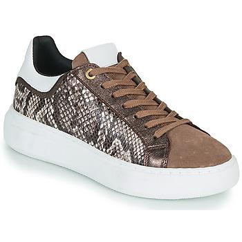 鞋子 女士 球鞋基本款 JB Martin HIBISCUS 棕色