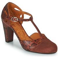 鞋子 女士 高跟鞋 Chie Mihara KUNA 棕色