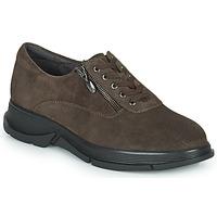 鞋子 女士 球鞋基本款 Scholl BRISTOL ZIP 棕色