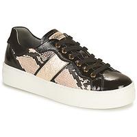 鞋子 女士 球鞋基本款 Nero Giardini BETTO 黑色 / 金色