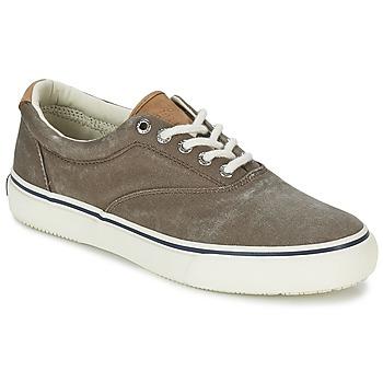 鞋子 男士 球鞋基本款 Sperry Top-Sider STRIPER CVO 巧克力色