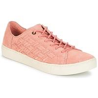鞋子 女士 球鞋基本款 Toms LENOX  bloom